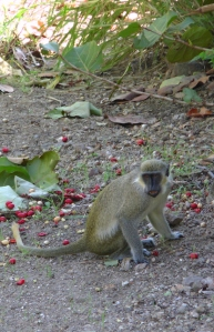 Monkey snack ground